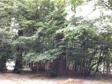 つるぎ 『金劔宮(きんけんぐう)』白山7社のひとつで、全国屈指の最強金運神社。
