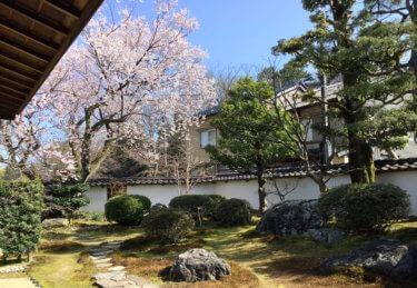 金沢城の大手堀と黒門前緑地のコシノヒガンザクラ